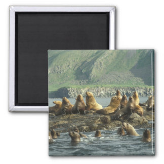 Seal Island Magnet 2 Inch Square Magnet