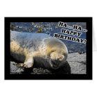 Seal Laughing Ha Ha Happy Birthday Card