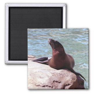 Seal Magnet