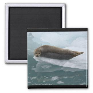 Seal Refrigerator Magnets