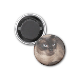 SEAL POINT SIAMESE CAT MAGNET
