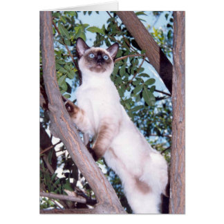 Seal point Siamese greeting card