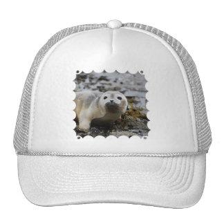 Seal Pup Baseball Hat