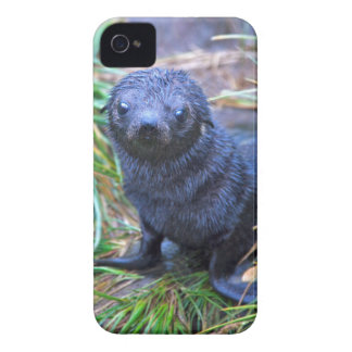 Seal Pup iPhone 4 Case