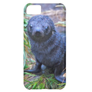Seal Pup iPhone 5 Case