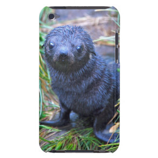 Seal Pup iPod Touch Case