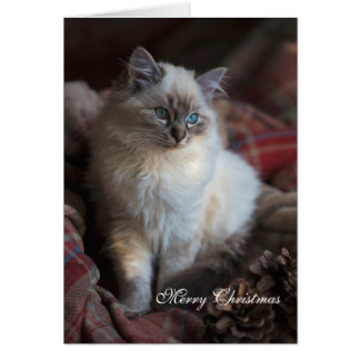 Seal Tabby Ragdoll Card