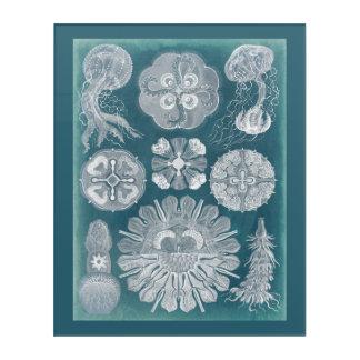 Sealife Blueprint IV Acrylic Wall Art