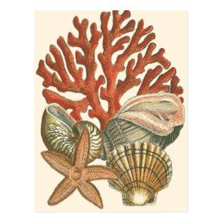 Sealife Collection Postcard
