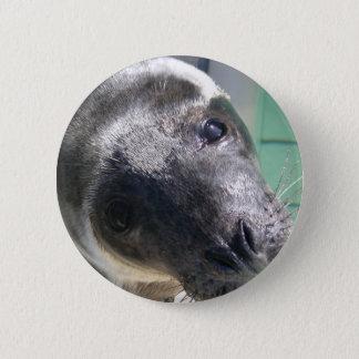 sealion 6 cm round badge