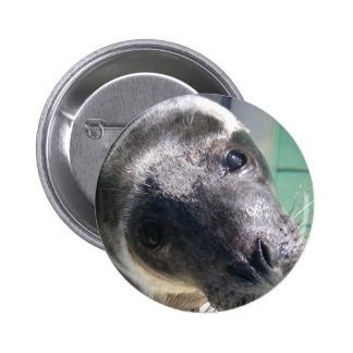 sealion 6 cm round badge