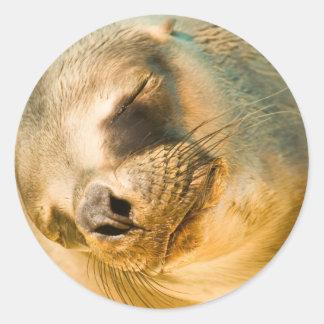 Sealion Classic Round Sticker