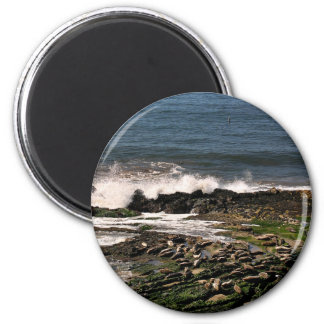 Seals 6 Cm Round Magnet