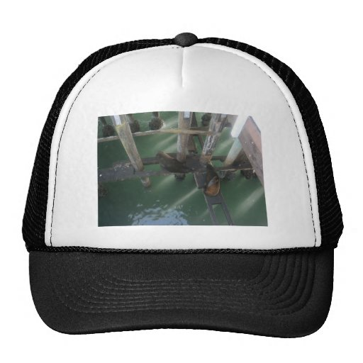 Seals a laying mesh hat