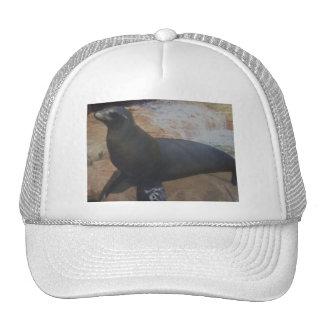 seals hat