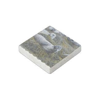 Seals in Seaweed Stone Magnet