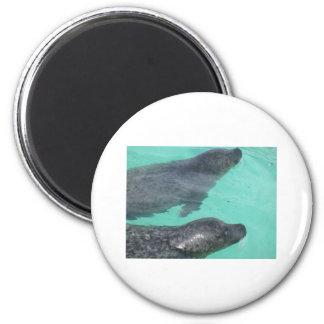seals fridge magnet