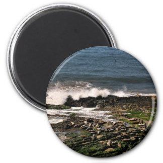Seals Magnets