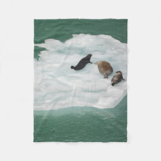 Seals on an Iceberg Blanket