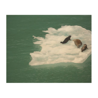 Seals on an Iceberg Wood Print