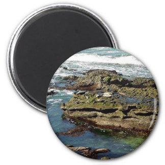 Seals On Rocks Water Fridge Magnet