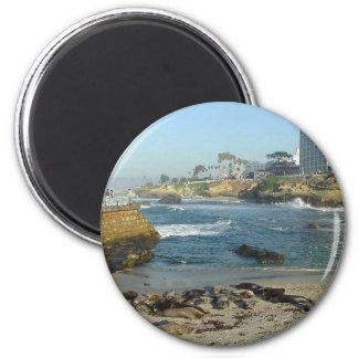 Seals On Sand In La Jolla Cove Refrigerator Magnets