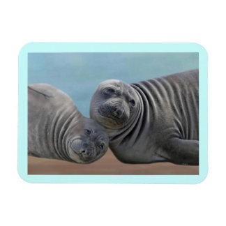 Seals on the Sand Premium Magnet