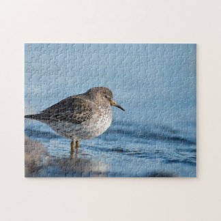 Searching Rock Sandpiper Jigsaw Puzzle