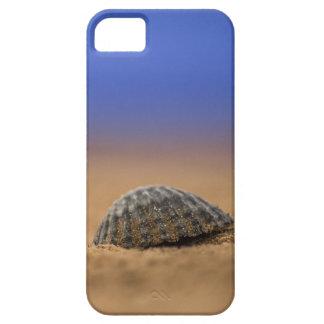 Seashell iPhone 5 Cases