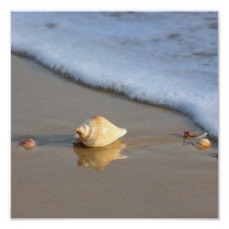 Seashell on sand poster