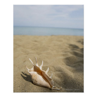 Seashell on sandy beach poster