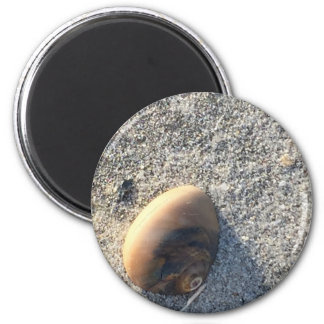 Seashell Photo Magnet