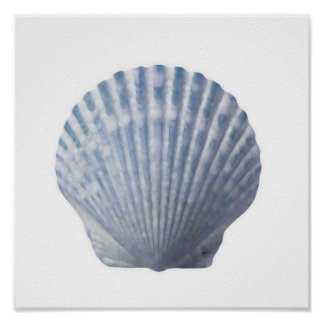 Seashell Print