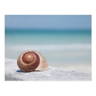 Seashell | St. Petersburg, Florida Postcard