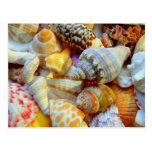 Seashell Tropical Party Invitation Postcard