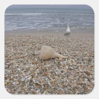 Seashells and Sea Gulls Square Sticker