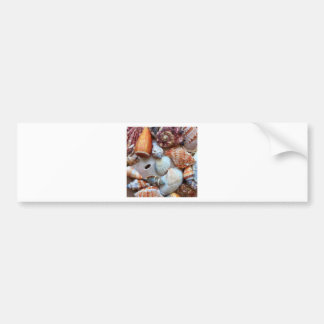 Seashells by the Seashore Bumper Sticker