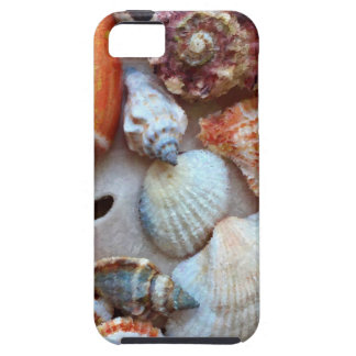 Seashells by the Seashore iPhone 5 Cover
