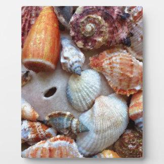 Seashells by the Seashore Plaque