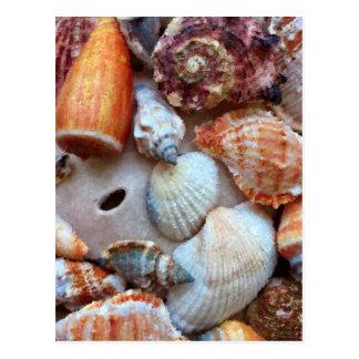 Seashells by the Seashore Postcard