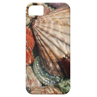 Seashells iPhone 5 Covers