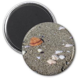 Seashells on sand. Summer beach background Magnet