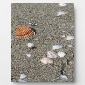 Seashells on sand. Summer beach background Plaque