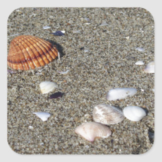 Seashells on sand. Summer beach background Square Sticker