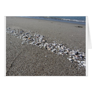 Seashells on sand Summer beach background Top view Card