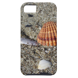 Seashells on sand Summer beach background Top view Case For The iPhone 5