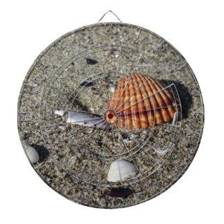 Seashells on sand Summer beach background Top view Dartboard