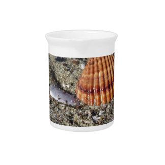 Seashells on sand Summer beach background Top view Pitcher