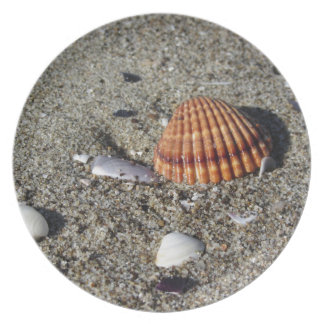 Seashells on sand Summer beach background Top view Plate