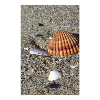Seashells on sand Summer beach background Top view Stationery